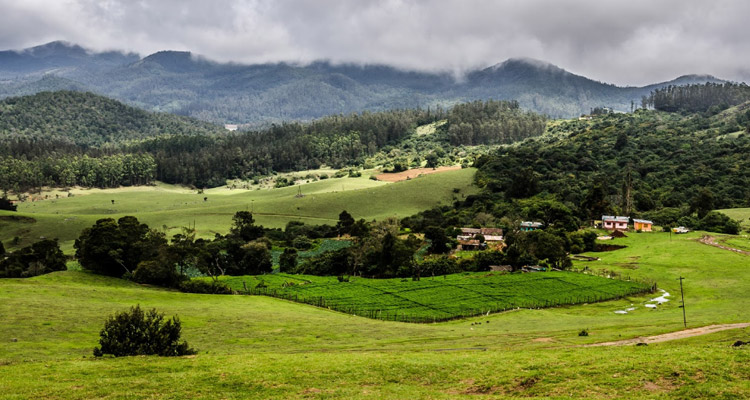 Wenlock Downs Ooty, Entry Fee, Timings, Entry Ticket Cost, Price - Ooty  Tourism 2021