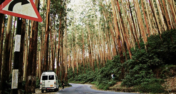 1 Day Ooty with Pine Forests