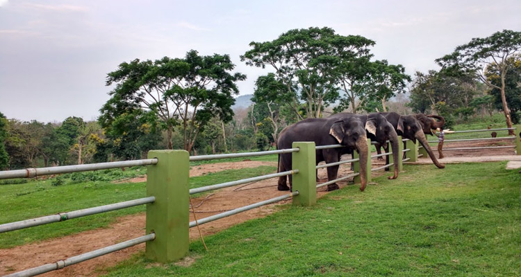 Places to Visit Ooty Mudumalai National Park